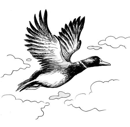 Flying duck. Ink black and white illustration