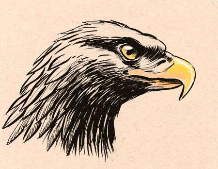 Eagle head. Ink illustration on colored paper