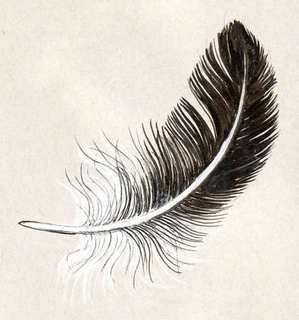 Bird feather. Ink illustration oh colored paper