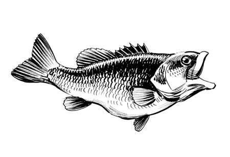Fish with an open mouth. Ink black and white illustration 스톡 콘텐츠