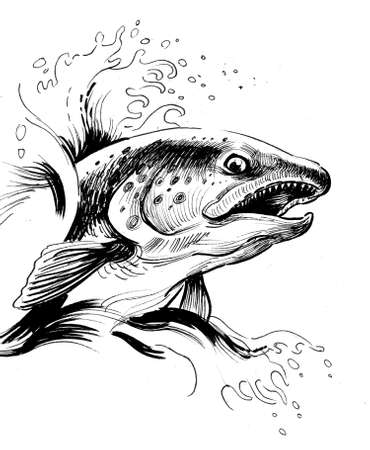 Jumping salmon fish. Ink black and white drawing