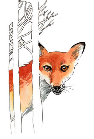 Hiding fox. Ink and watercolor illustration 스톡 콘텐츠