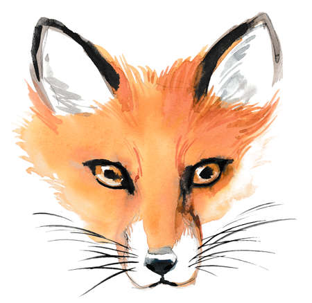 Orange fox head. Ink and watercolor sketch Banco de Imagens
