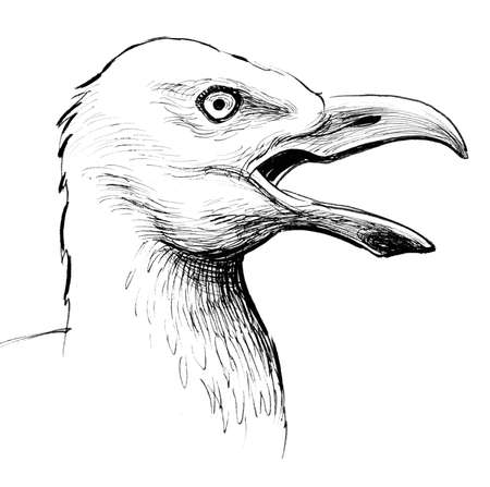 Seagull head. Ink black and white illustration Banque d'images