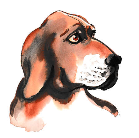 Watercolor sketch of a cute hunting dog