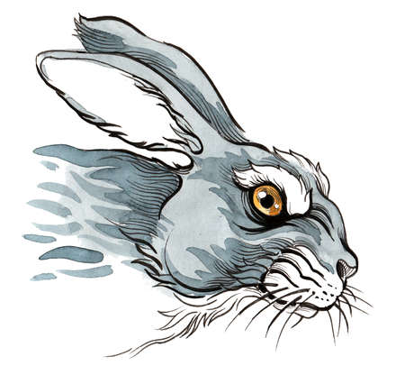 Angry hare. Ink and watercolor illustration