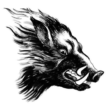 Wild boar head. Ink black and white drawing 版權商用圖片