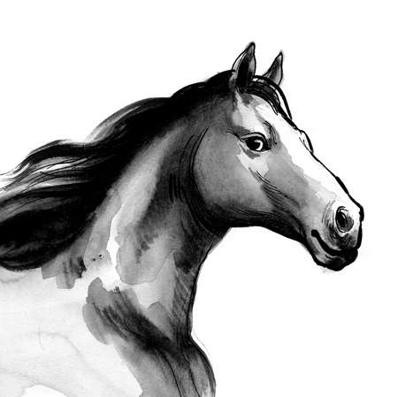 Beautiful horse. Ink and watercolor illustration Banque d'images