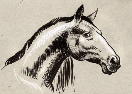 Horse head. Ink and pencil drawing on a textured paper