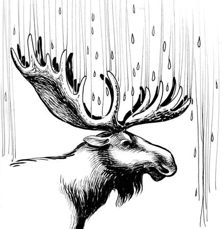 Moose in the rain. Ink black and white illustration