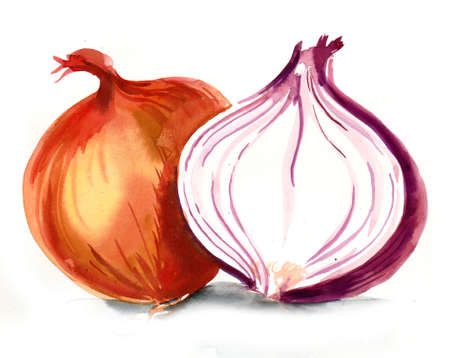 Watercolor onion