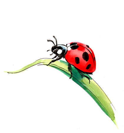 Ladybird on the grass. Watercolor painting