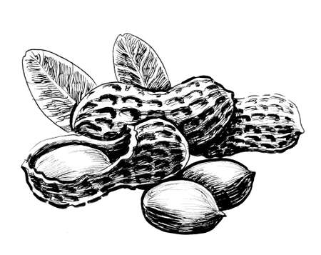 A bunch of peanuts. Ink black and white illustration 版權商用圖片