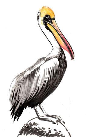 Pelikanvogel sitzt auf einem Felsen Standard-Bild