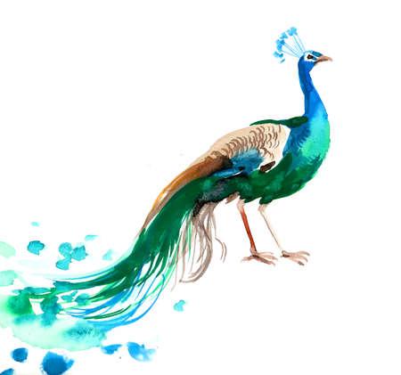 Watercolor peacock Foto de archivo