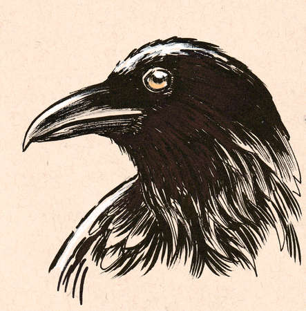 Raven bird head. Ink drawing on colored paper