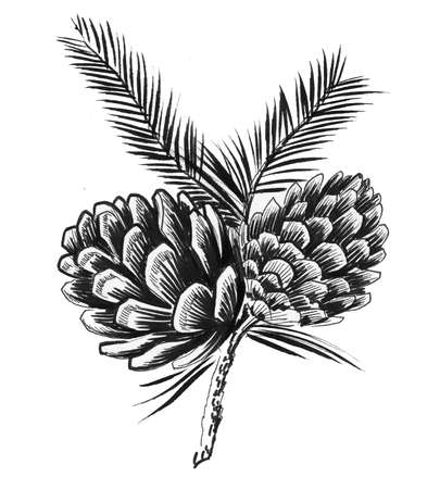 Pine cones. Ink black and white illustration