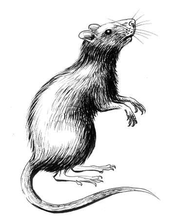 Rat standing on rear legs. Ink black and white illustratopn