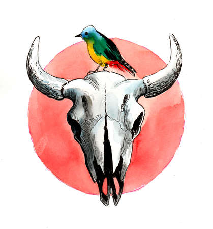 Bison skull and colorful bird. Ink and  illustration
