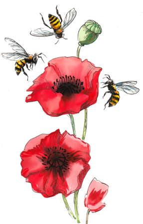 Red poppies and flying bees. Ink and  illustration Banco de Imagens