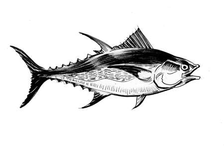 Tuna fish. Ink black and white illustration Imagens