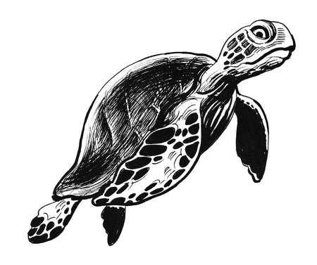 Swimming turtle. Ink black and white illustration