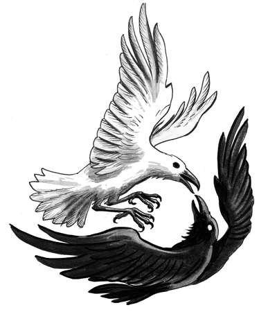 Black and white birds fighting. Ink and  illustration