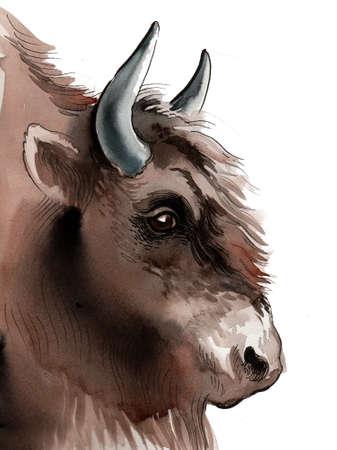 Bison head.  illustration Stock Photo