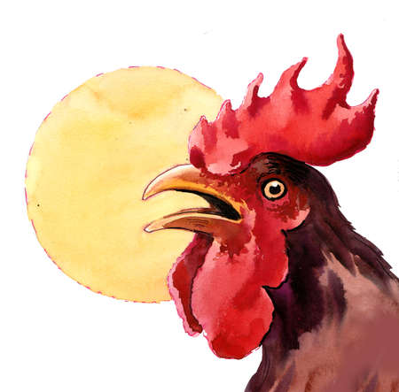 Watercolor rooster head and sub illustration