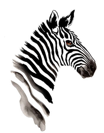 Watercolor zebra.