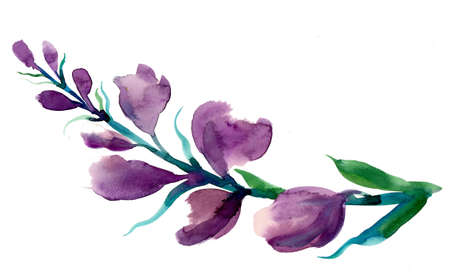 Purple watercolor illustration