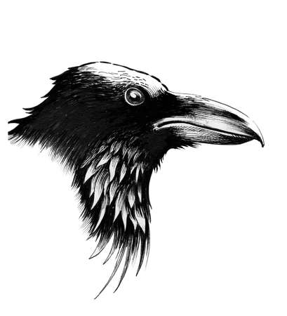 Raven head. Ink black and white illustration