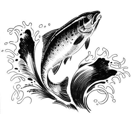 Jumping salmon fish. Ink black and white illustration Imagens