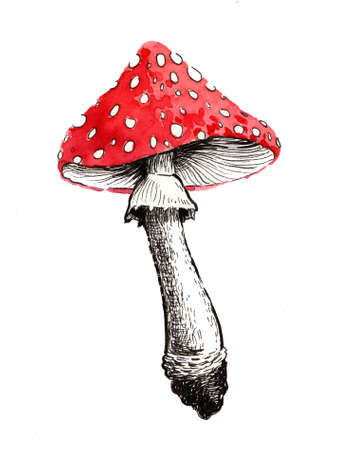 Poisonous mushroom. Watercolor sketch Imagens