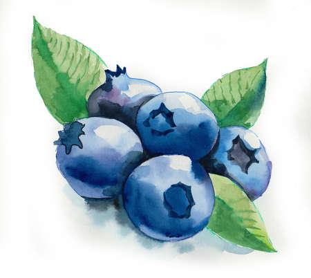 Aquarell Blaubeere