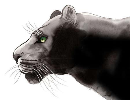 Black panther illustration. Ink and  illustration