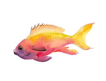 coral fish 写真素材