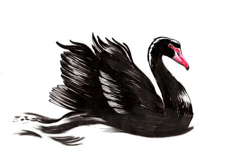 Swimming black swan. Ink and watercolor