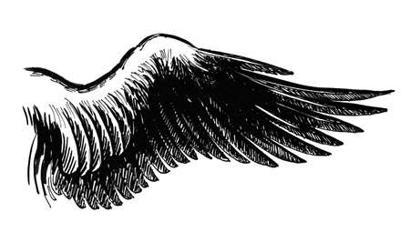 Ink black and white illustration of a bird wing Stockfoto