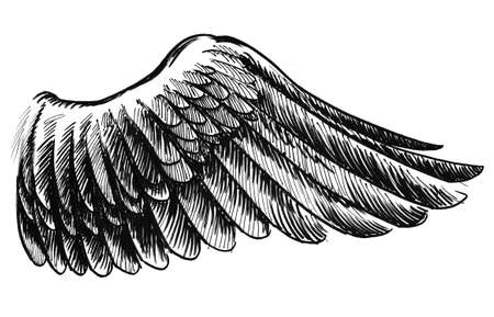 Birds wing. Ink black and white illustration