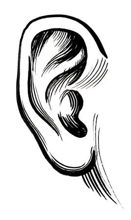 Human ear. Ink black and white drawing