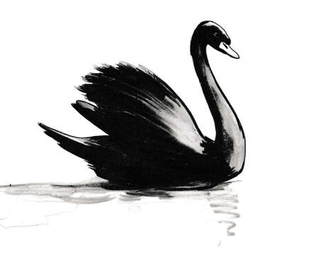 Swimming black swan. Ink and  illustration