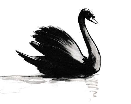Swimming black swan. Ink and  illustration