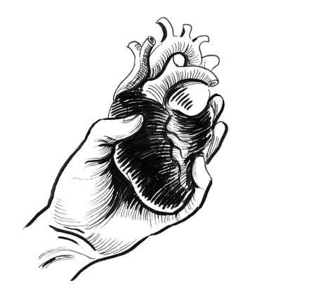 Hand holding human heart Stock Photo