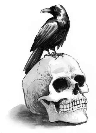 Black raven sitting on a human skull. Ink and  illustration