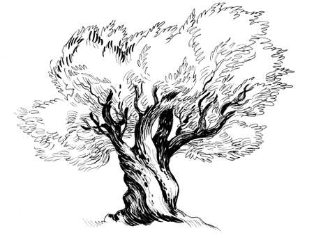Big olive tree. Ink black and white illustration 版權商用圖片