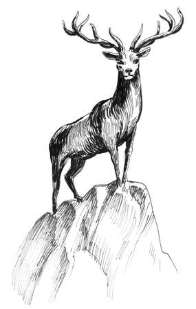 Deer standing on the rock. Ink black and white illustration
