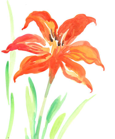 Orange lily flower. watercolor painting