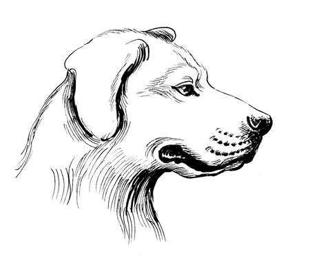 Dog head. Ink black and white drawing