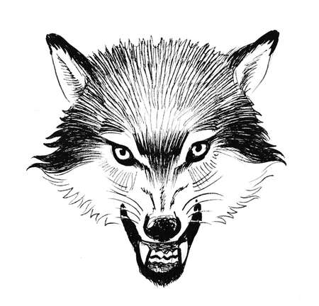 Angry wolf head. Ink black and white drawing